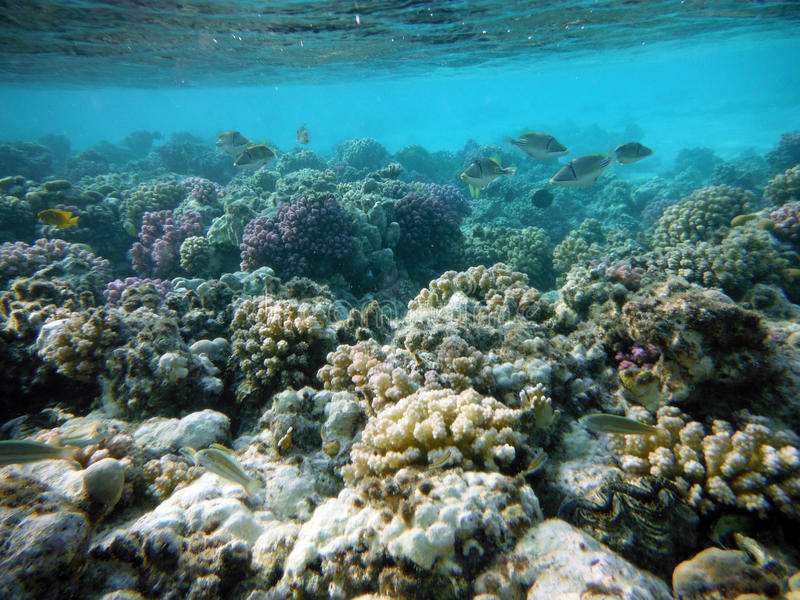 Large coral reef seabed stock photography