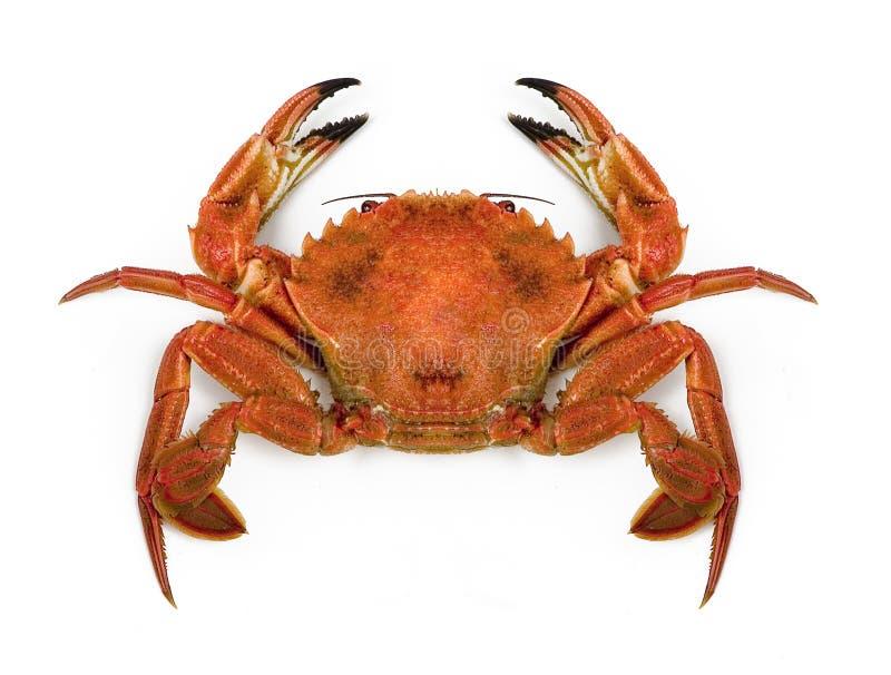 Large crab stock photos