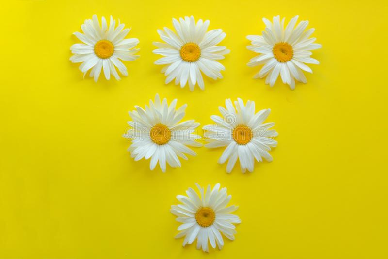 Large daisies laid out in the form of a triangle on a yellow background. Frame for text.  triangle lesbian symbol royalty free stock photos