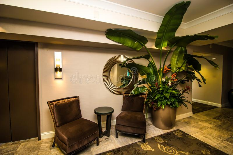 Large Decorator Plant With Two Chairs royalty free stock photos
