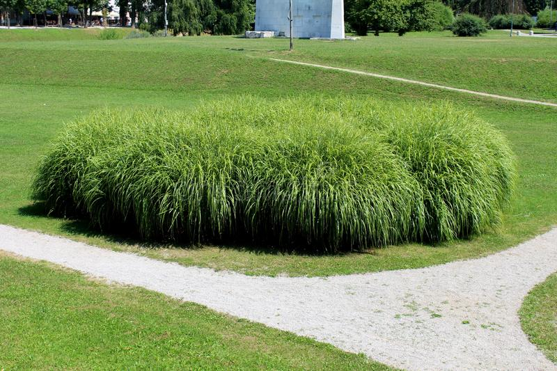 Large densely growing bush like ornamental grass planted in local public park surrounded with green grass and white gravel path. Large densely growing bush like stock photography