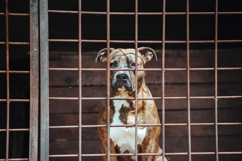 A large dog sits in the aviary. Sad dog on dark background royalty free stock photography