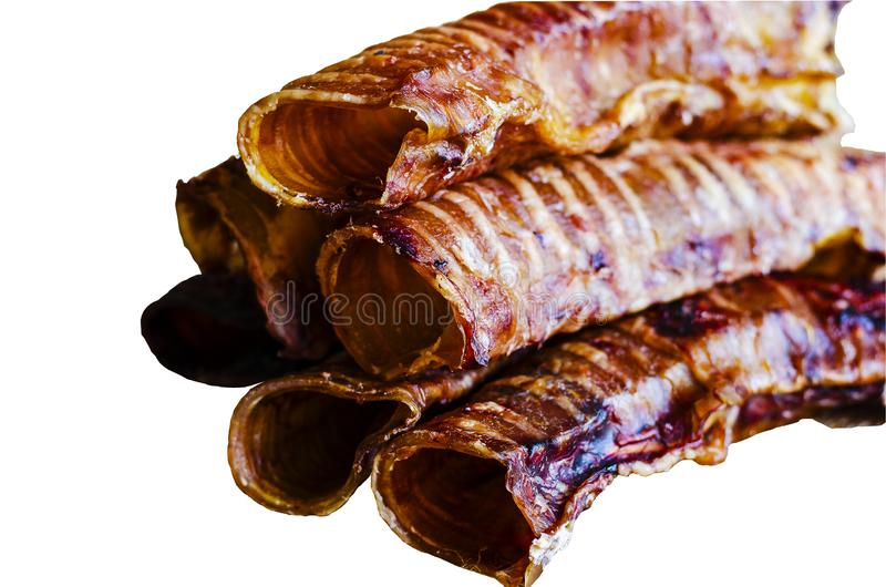 Large dried trachea on a white background. Natural treats for dogs. stock image