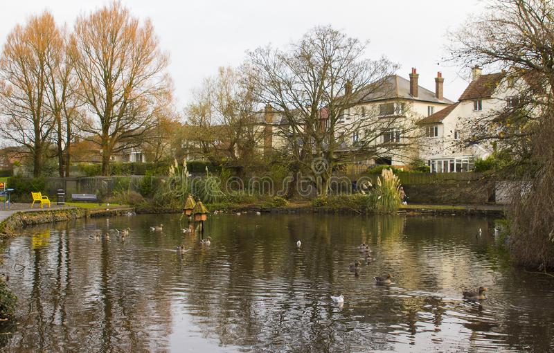 The large duck pond and wildfowl sanctuary in Ward Park in Bangor County Down in Northern Ireland. On a dull, but mild autumn morning royalty free stock images