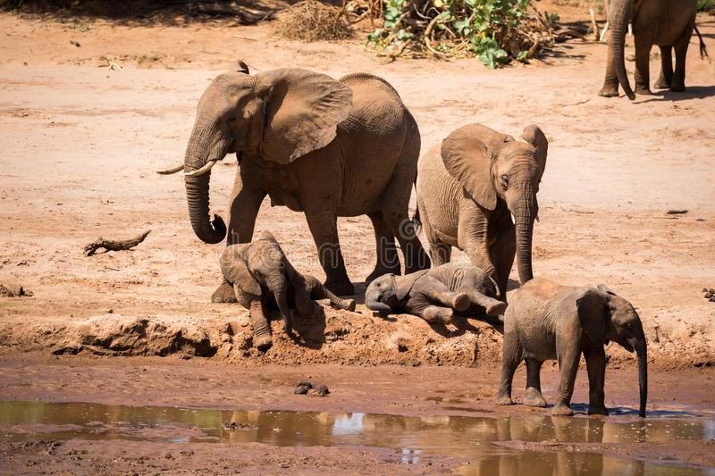 A large elephant family is on the bank of a river stock images