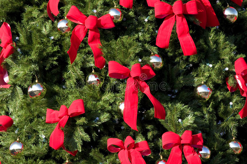 Download Large Evergreen With Red Bows Royalty Free Stock Image - Image: 12081536