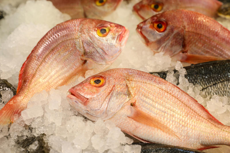 Large-eye dentex or Dentex macrophthalmus fishes on ice for sale in the greek fish market. Large-eye dentex or Dentex macrophthalmus on ice for salle in the royalty free stock photography