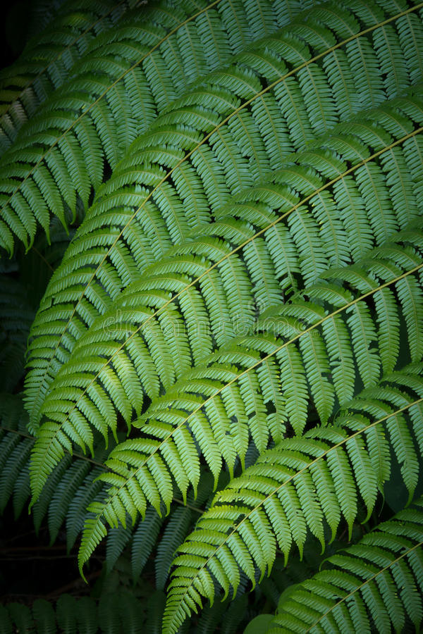 Download Large fern leaf stock image. Image of ecology, leaves - 20663599