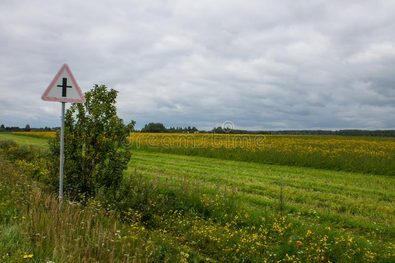 A large field with yellow flowers by the road. A large field of ripe rye with green grass in the foreground and trees in the background on a cloudy summer day stock image
