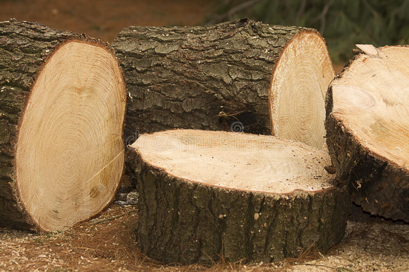 Large Firewood Chunks. Several large cut chunks of firewood laying together royalty free stock photo