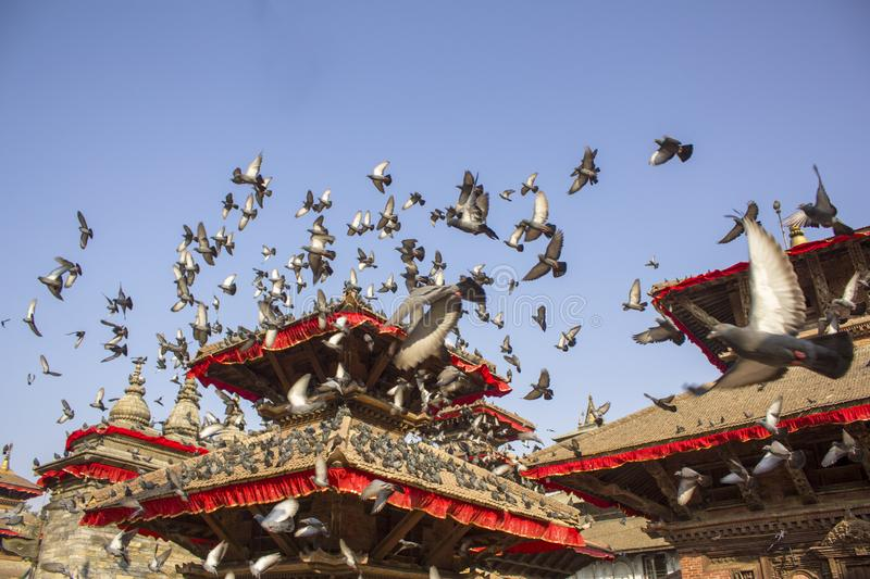 large flock of gray pigeons flying in a clear blue sky over the red roofs of ancient Asian temples stock photography