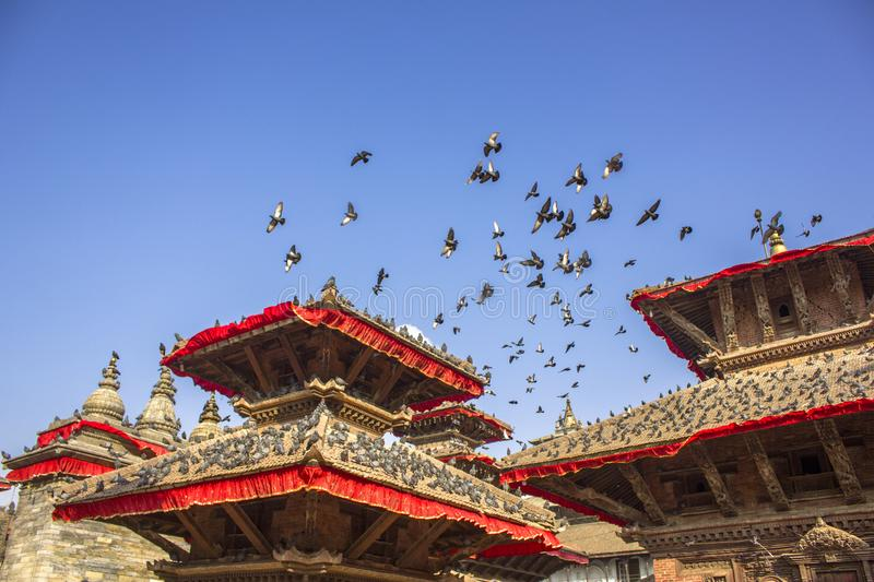 large flock of gray pigeons on the roofs of the pagodas of red Asian temples and fly in the blue clear sky stock photos