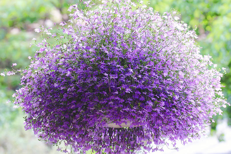 A large floral ball hanging basket royalty free stock photo