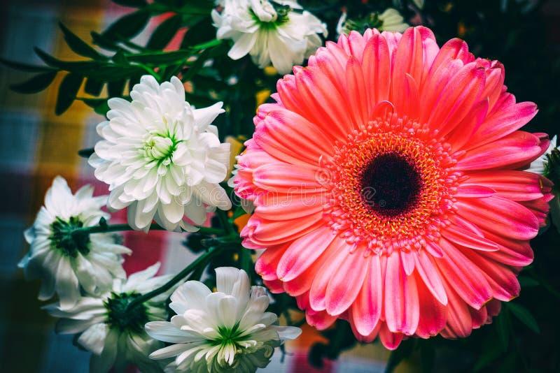 Pink gerbera and chrysanthemum royalty free stock images