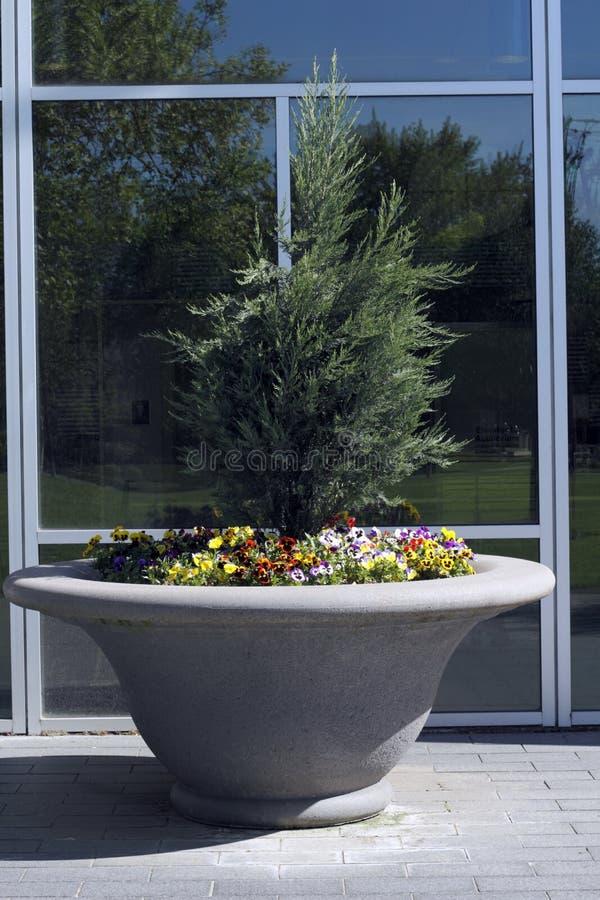 Large Flower Planter royalty free stock photo