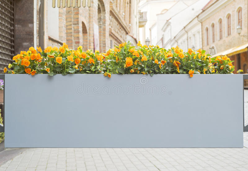 Large flower pot with flowers stock photos