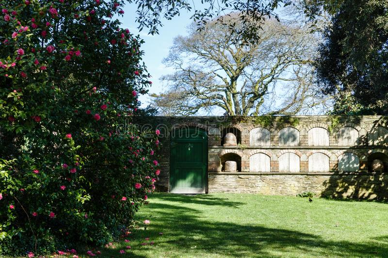 Brick wall with green doors and niches in the wall. Large flowering rhododendron bush in the foreground, brown brick wall with green doors and niches in the wall royalty free stock photography