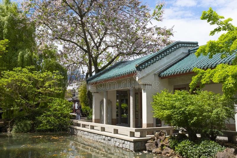 Large flowering tree, pond and building in the Dr. Sun Yat-Sen classical Chinese garden. Large flowering Trees and shrubs and deck in the Sun Yat Sen classical stock photos
