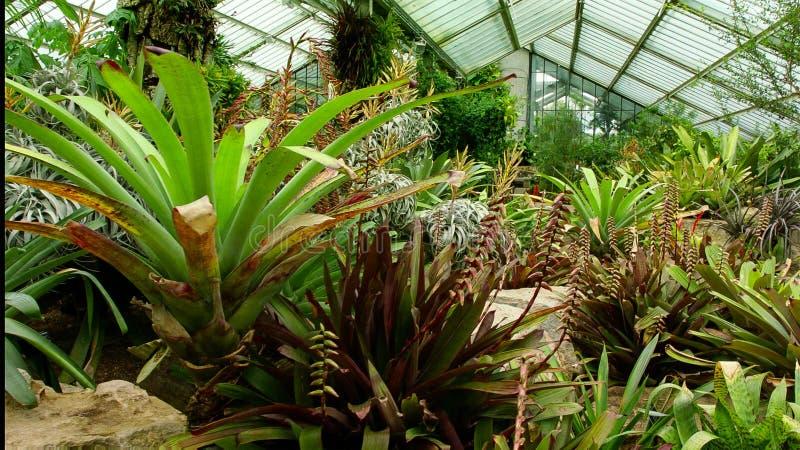 Large Glasshouse in botanical gardens stock photography