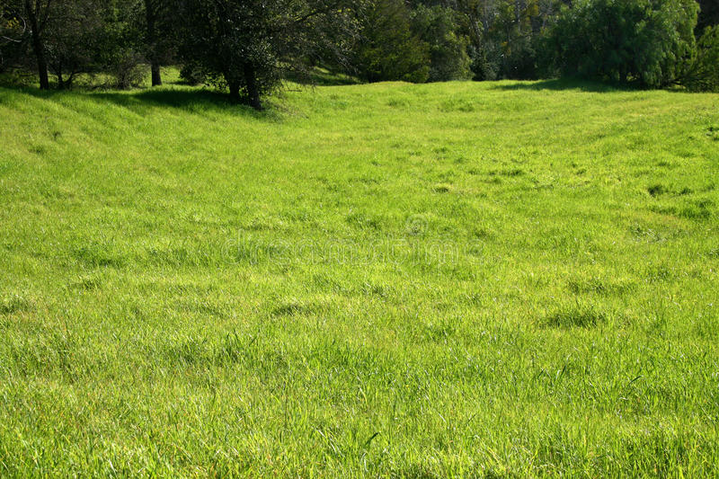 Large grassy field stock photo image of grass grassy 50221456 download large grassy field stock photo image of grass grassy 50221456 voltagebd Images