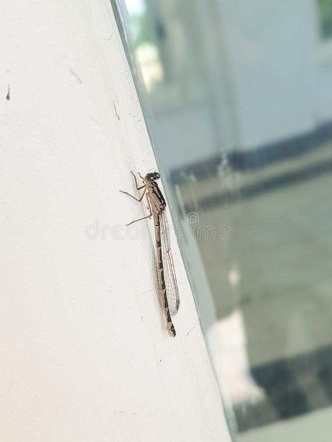 A large gray dragonfly on the window frame. Close-up, background royalty free stock images