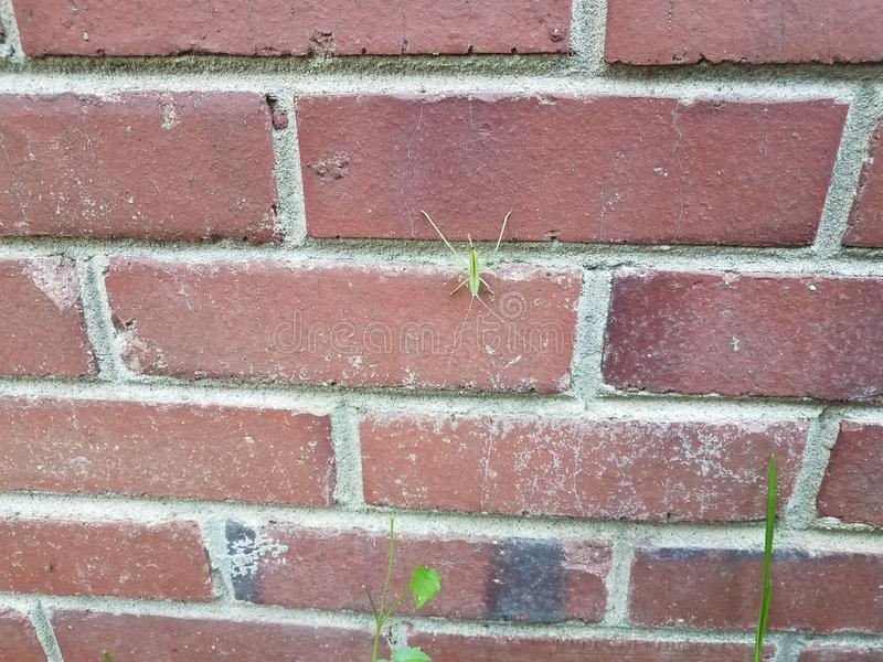Large green insect on red brick masonry wall stock photo