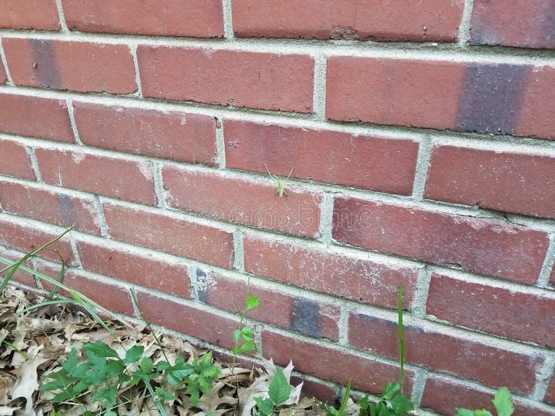 Large green insect on red brick masonry wall royalty free stock photos