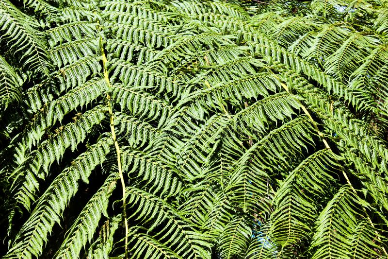 A Large Green Leafy Fern Stock Photo Image Of Fern 197922888