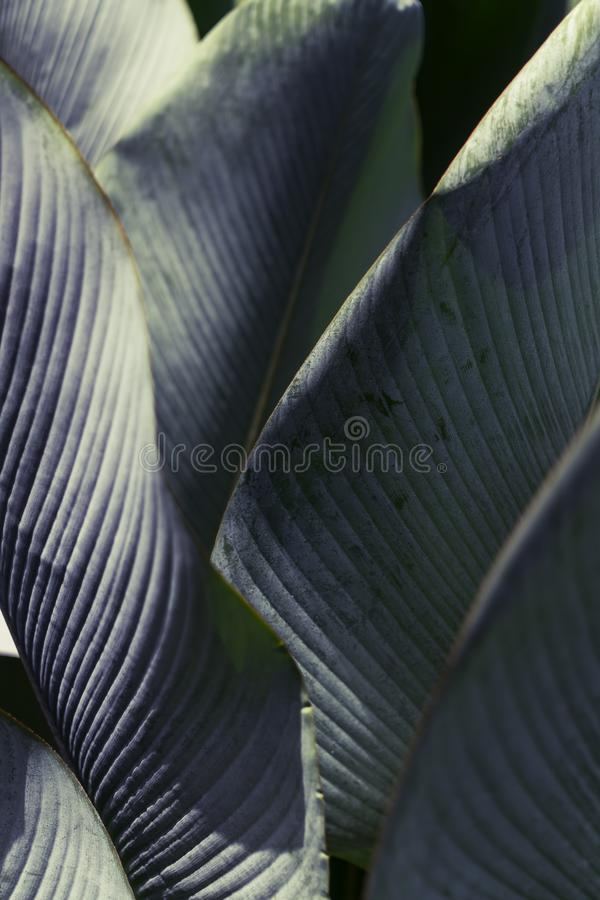 Large green Tropical leaves background. Lush foliage concept. Travel stock photography