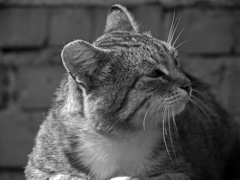 A large grey cat sitting on the porch outside the house. Cat. A large grey cat sitting on the porch outside the house stock photo