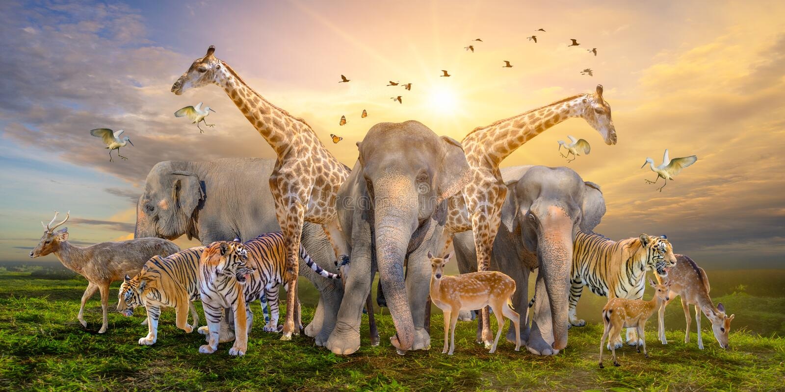Large group of african safari animals. Wildlife conservation concept stock photo