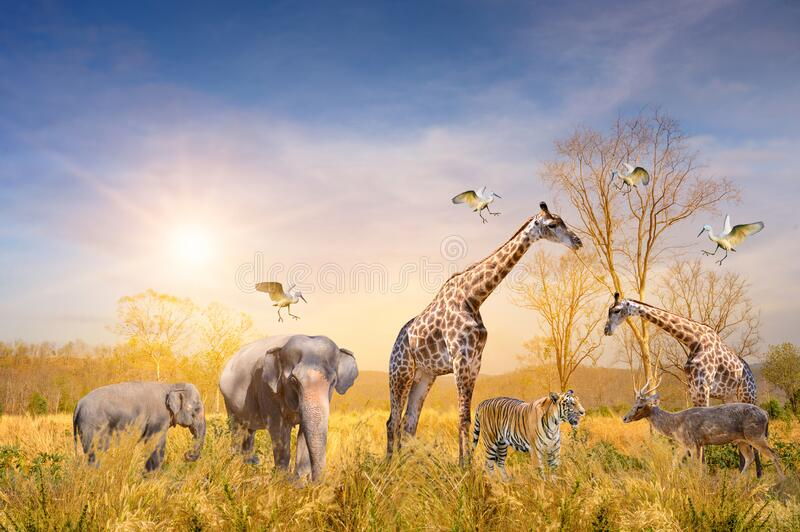 Large group of african safari animals. Wildlife conservation concept royalty free stock images