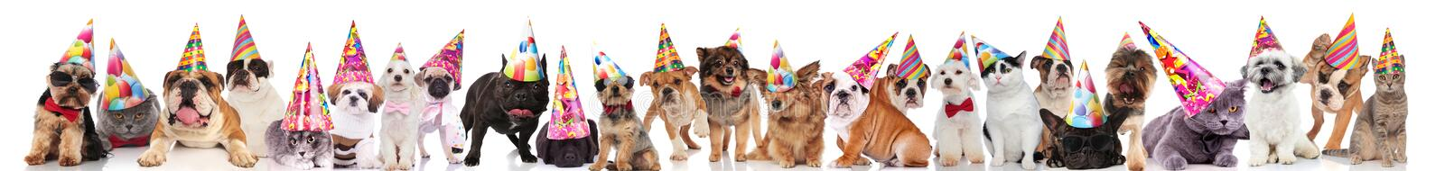 Large group of cute cats and dogs wearing colorful caps. Large group of cute cats and dogs wearing colorful birthday caps while standing, sitting and lying on stock photo