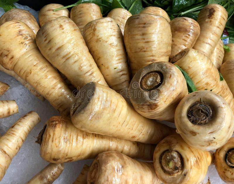 A large group of parsnips stock photos