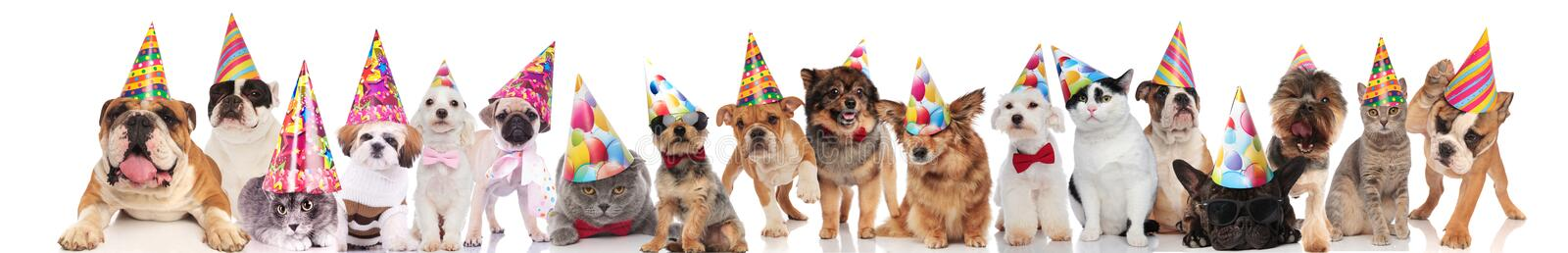 Large group of party domestic animals of different breeds royalty free stock images
