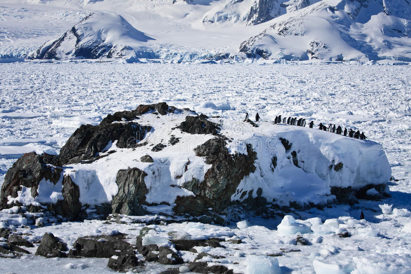 large-group-penguins-having-fun-snowy-hi