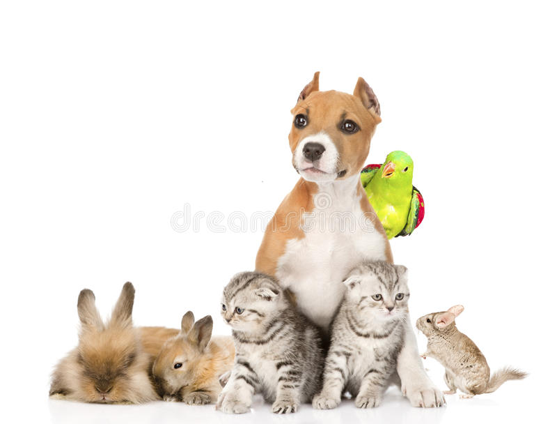 large group of pets together in front. Isolated on white stock images