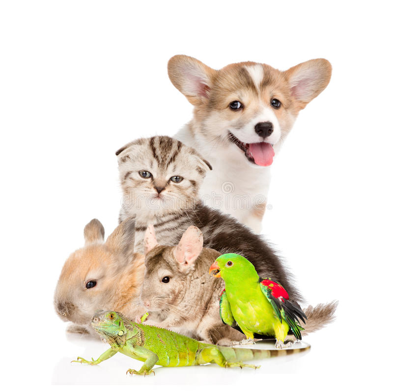 Large group of pets. on white background royalty free stock images