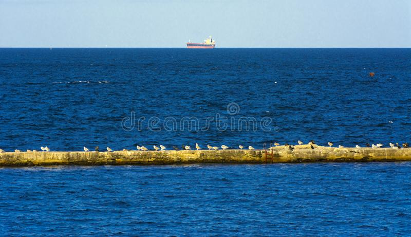 A large group of sea gulls sits on a concrete breakwater against royalty free stock photo