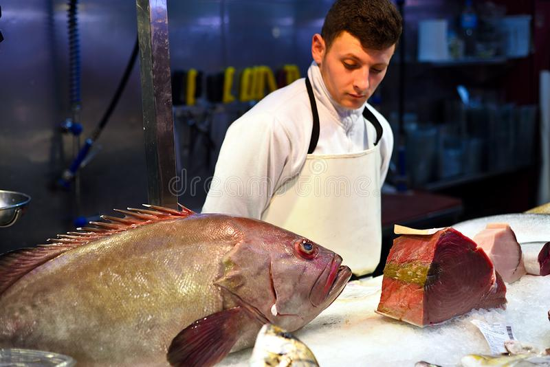 Big grouper fish. Large grouper at the fish counter at the market of Cartagena. Young seller looks at it with interest. Spain. Mursia royalty free stock photo