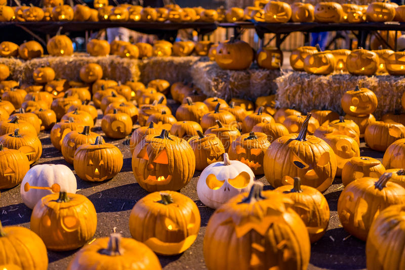 Large grouping of carved Halloween pumpkins royalty free stock images