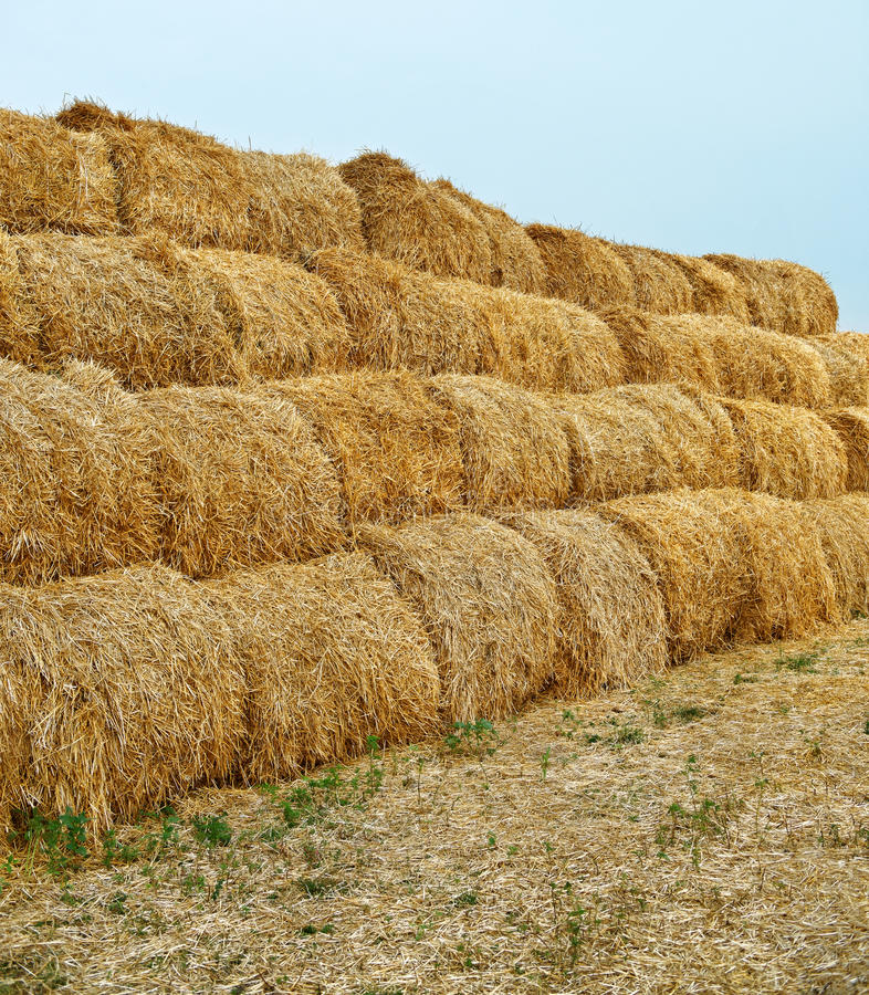 Download Large haystacks stock photo. Image of farm, nobody, color - 25945728