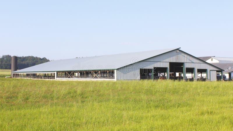 Large Industrial Alberta Cattle Barn Stock Photo Image