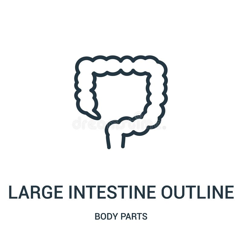 large intestine outline icon vector from body parts collection. Thin line large intestine outline outline icon vector illustration royalty free illustration