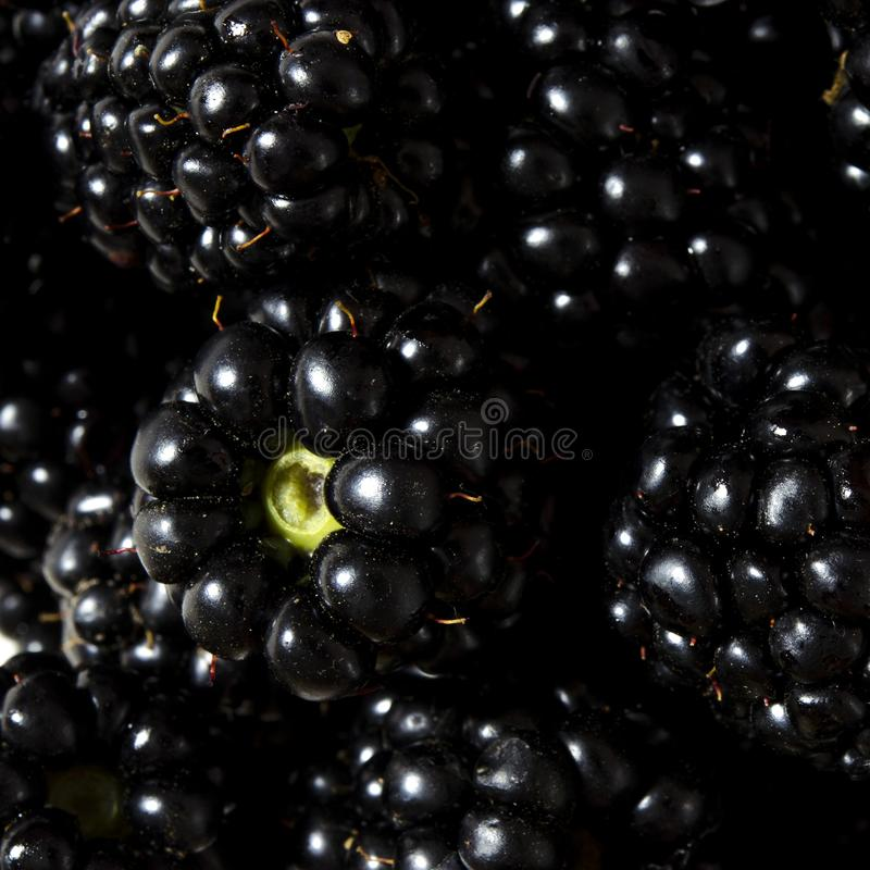 Large juicy black blackberry berries close-up with copy space top view stock photography