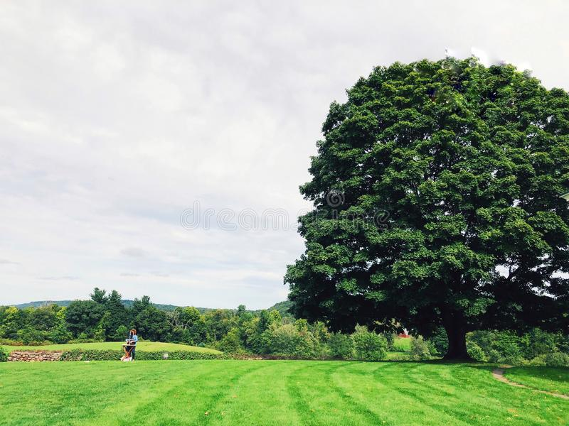 Hill–Stead Museum. The large lawn and trees inside The Hill–Stead Museum that is a Colonial Revival house and art museum set on a large estate in royalty free stock photo