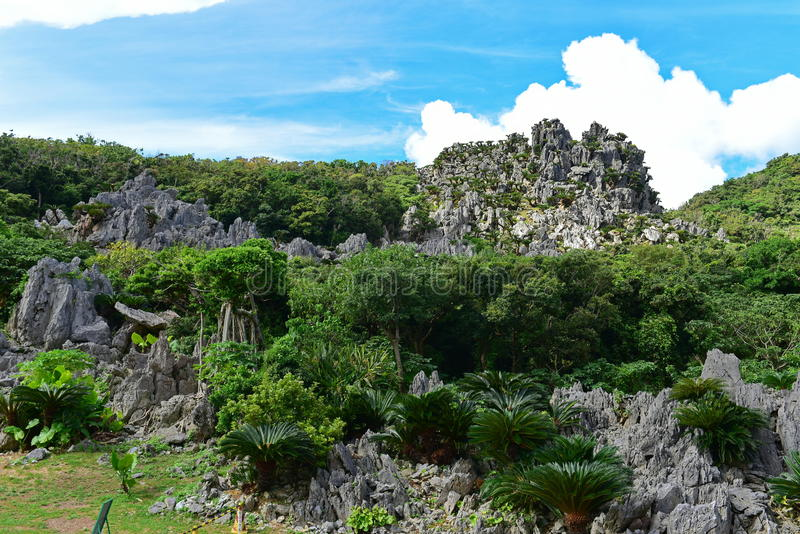 Large limestone rock formations in Daisekirinzan parkin Okinawa. Large limestone rock formations in Daisekirinzan park in Okinawa, Japan royalty free stock images