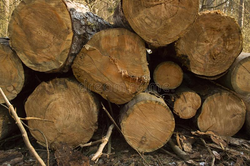 Logs of trees stacked after a felling stock photos