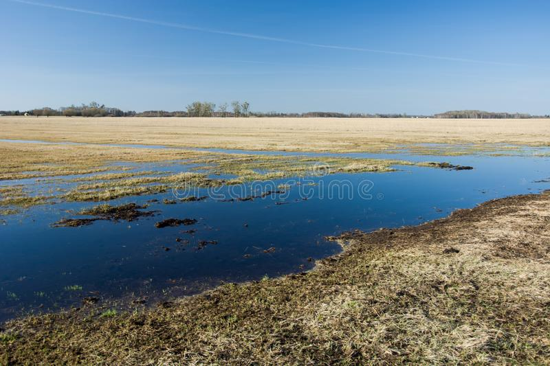 Large meadow flooded with water stock photo