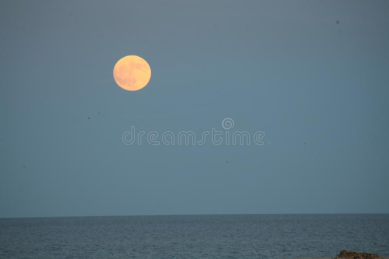 Large moon in a blue skyover the sea in the Natural park in Corralejo Fuerteventura Las Palmas Spain. Large glowing moon in a blue skyover the sea in the Natural royalty free stock image